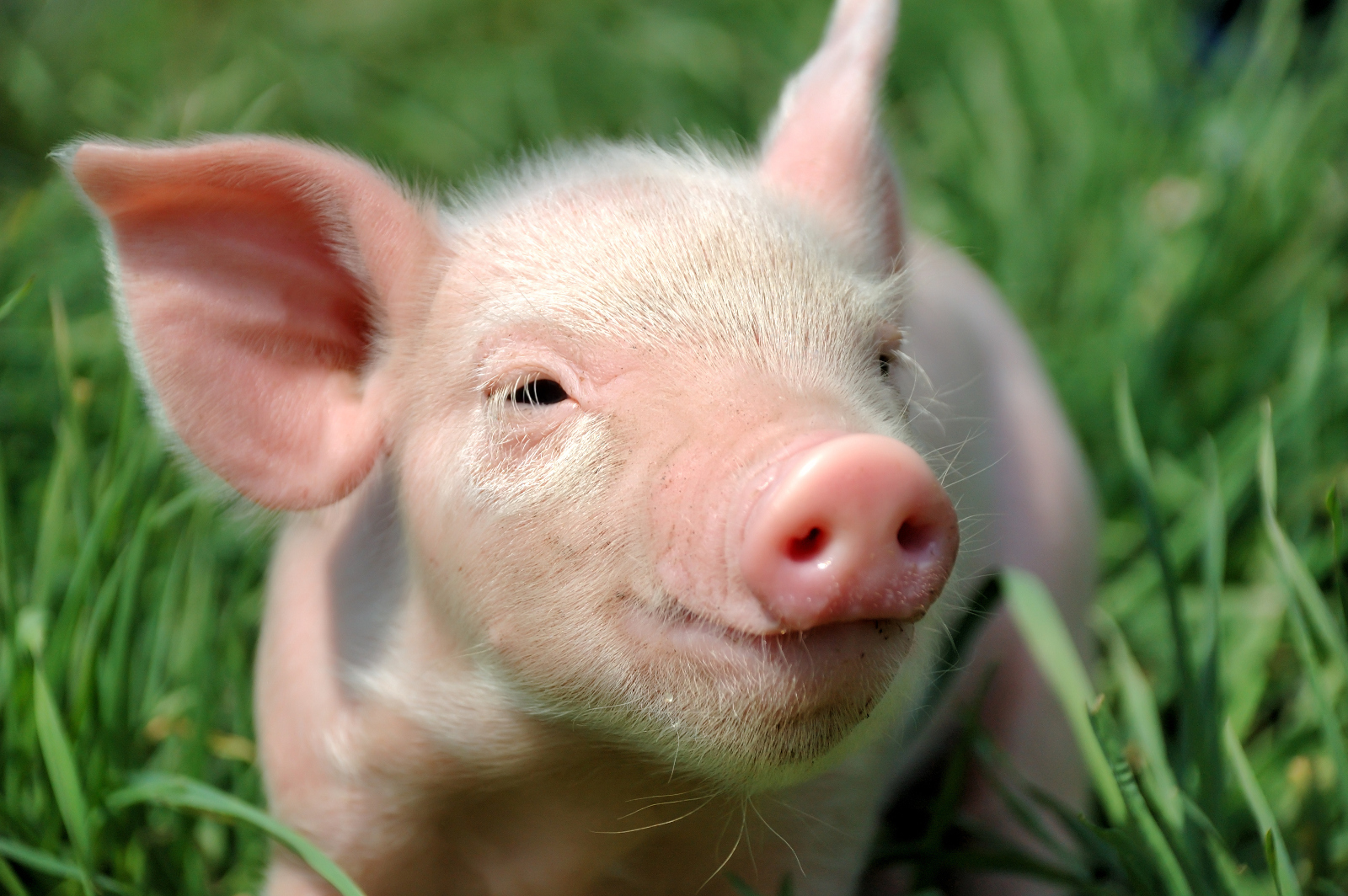 Facts You Probably Didn't Know About Farm Animals
