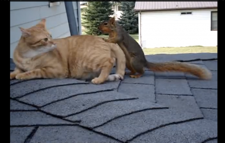 Squirrel Reunites With His Best Cat Buddy And Cuteness Ensues
