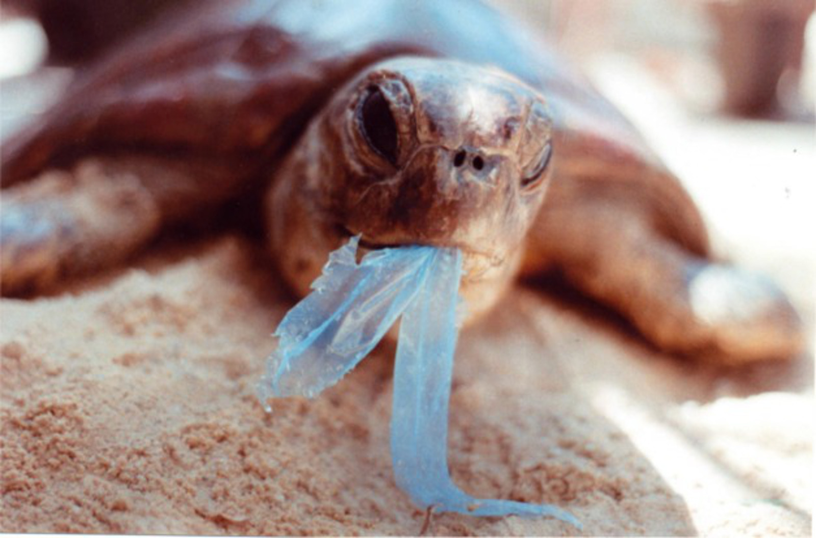These Photos of Who Really Suffers From Our Trash Will Make You Drop Plastic Like a Bad Habit!