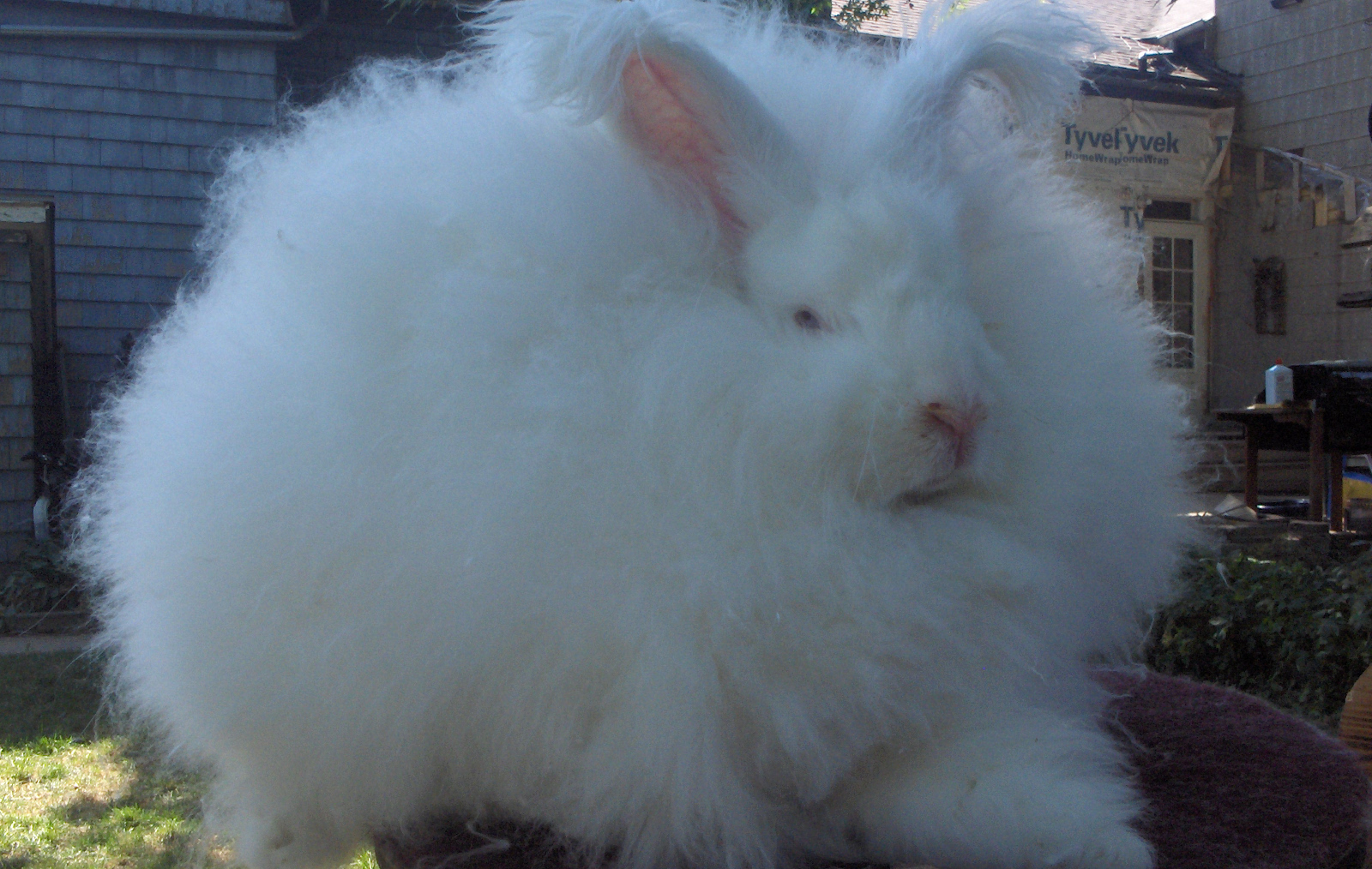 5 Shocking Reasons You Should Skip Angora Wool This Winter