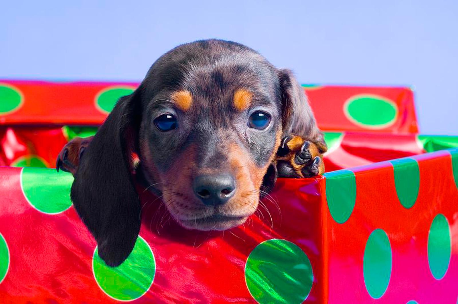 7 Reasons Why Pets Make Terrible Gifts