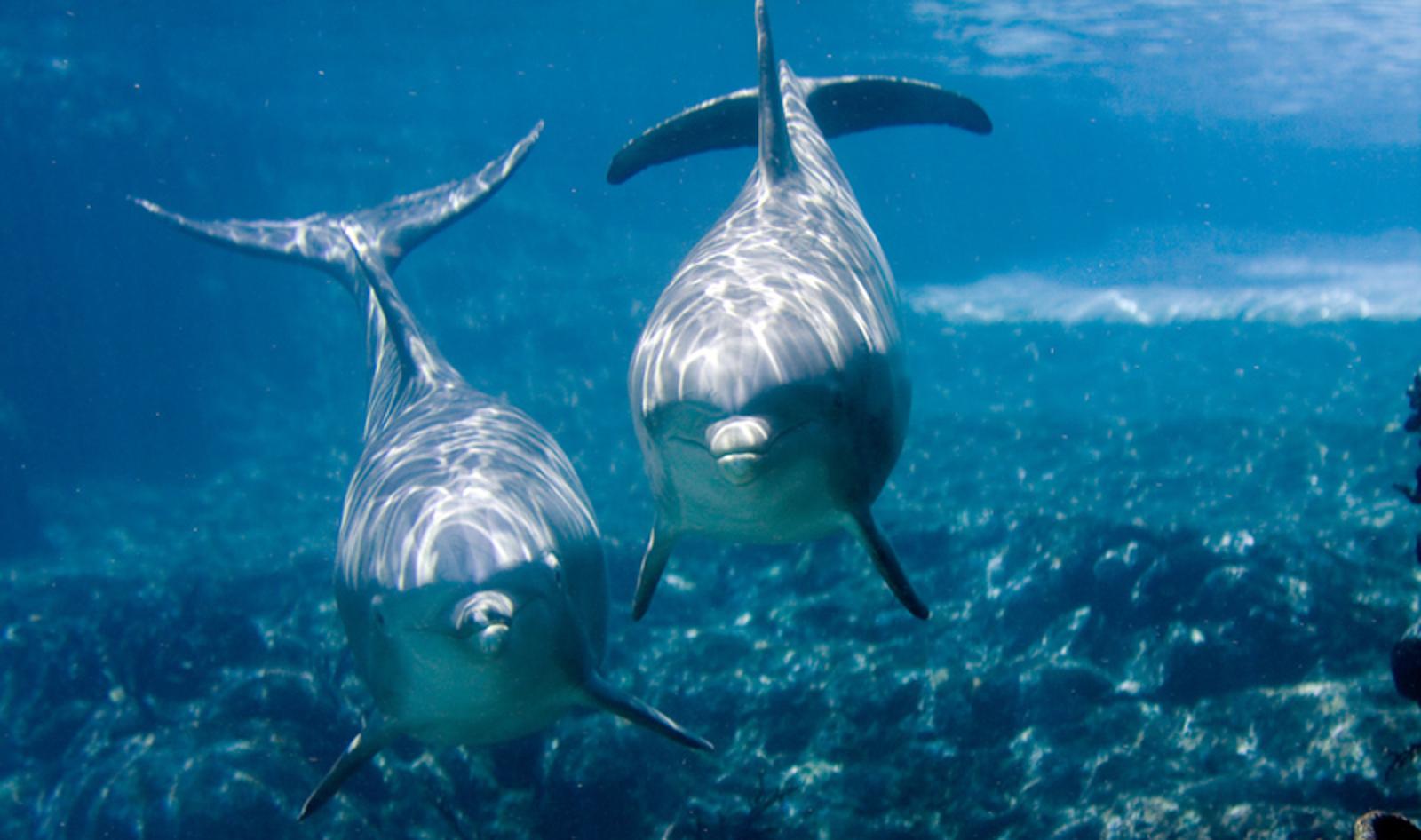 7 Things SeaWorld's Newborn Dolphin Calf May Never Experience