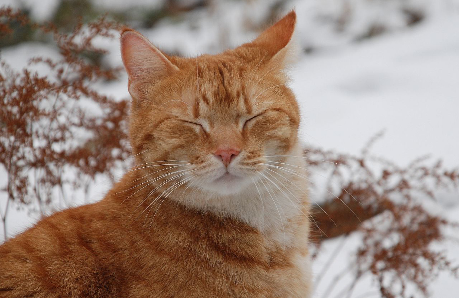 What You Can Do to Help Feral Cats Fare Well Through Winter