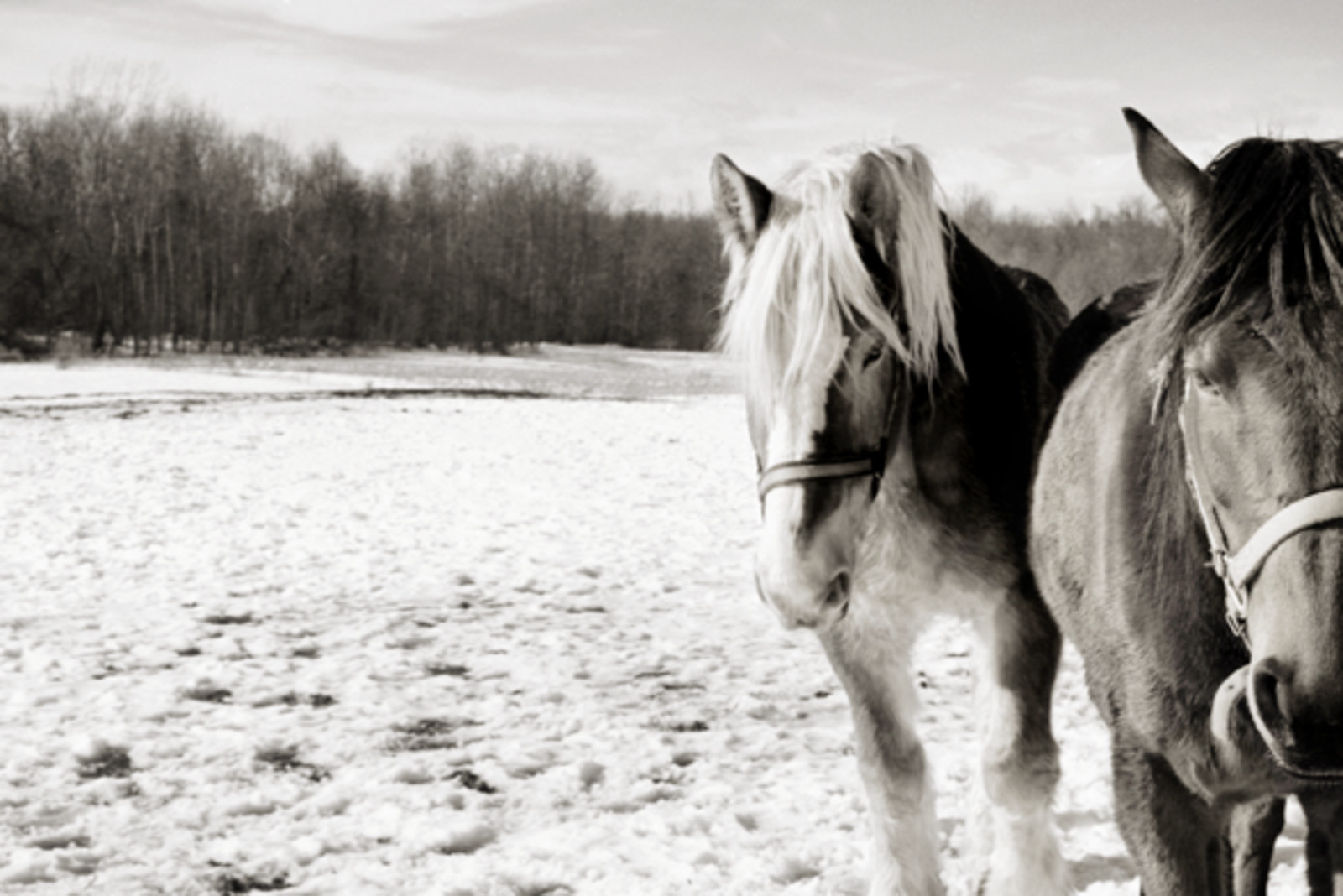 Artist Documents the Tragic Stories of Horses Across the U.S. Through Stunning Photos