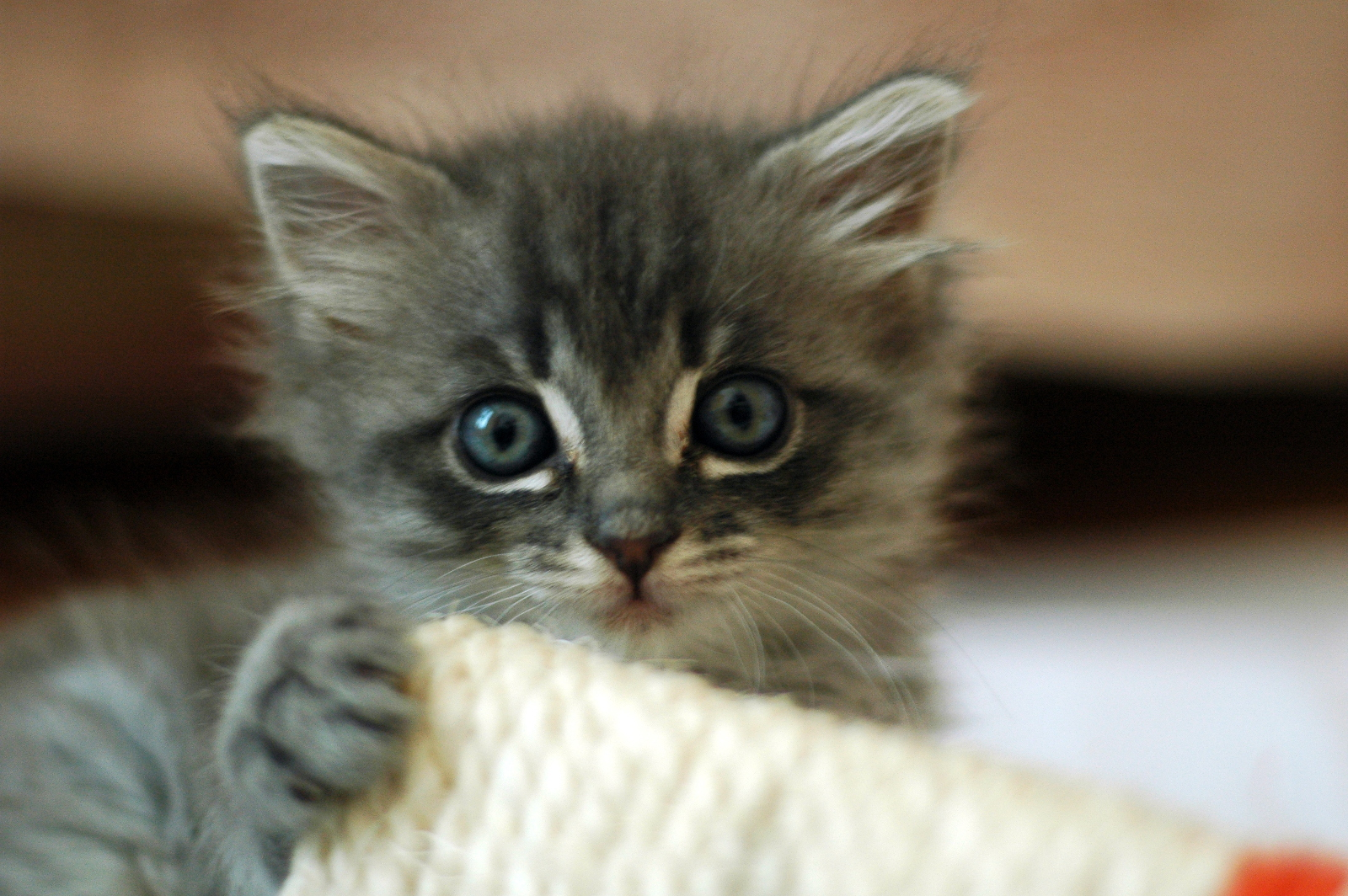 Tips for First-Time Pet Adopters