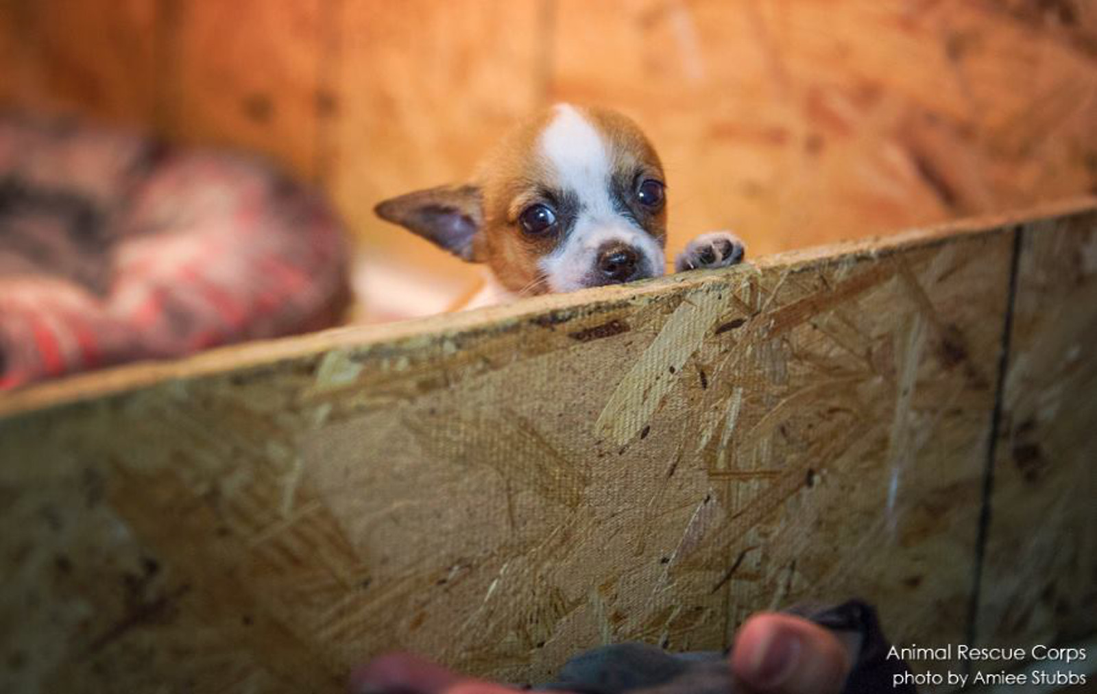 These Photos From Puppy Mills Prove Without Doubt You Should Always Adopt, NOT Shop for Pets