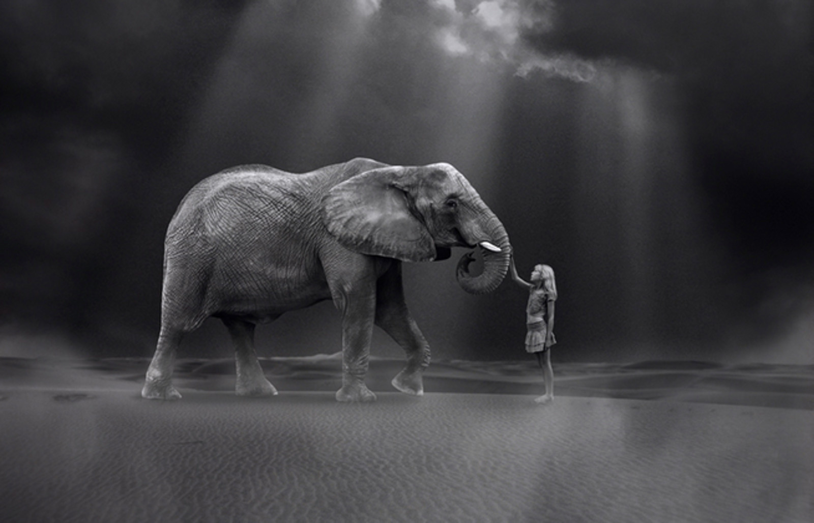 True Art Does Not Sacrifice Life: One Organizations Mission to Save Elephants
