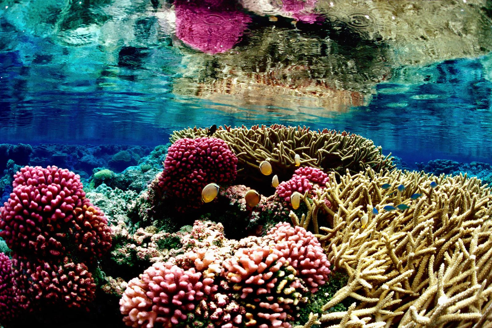 4 Innovative Ways You Can Help Protect Marine Species
