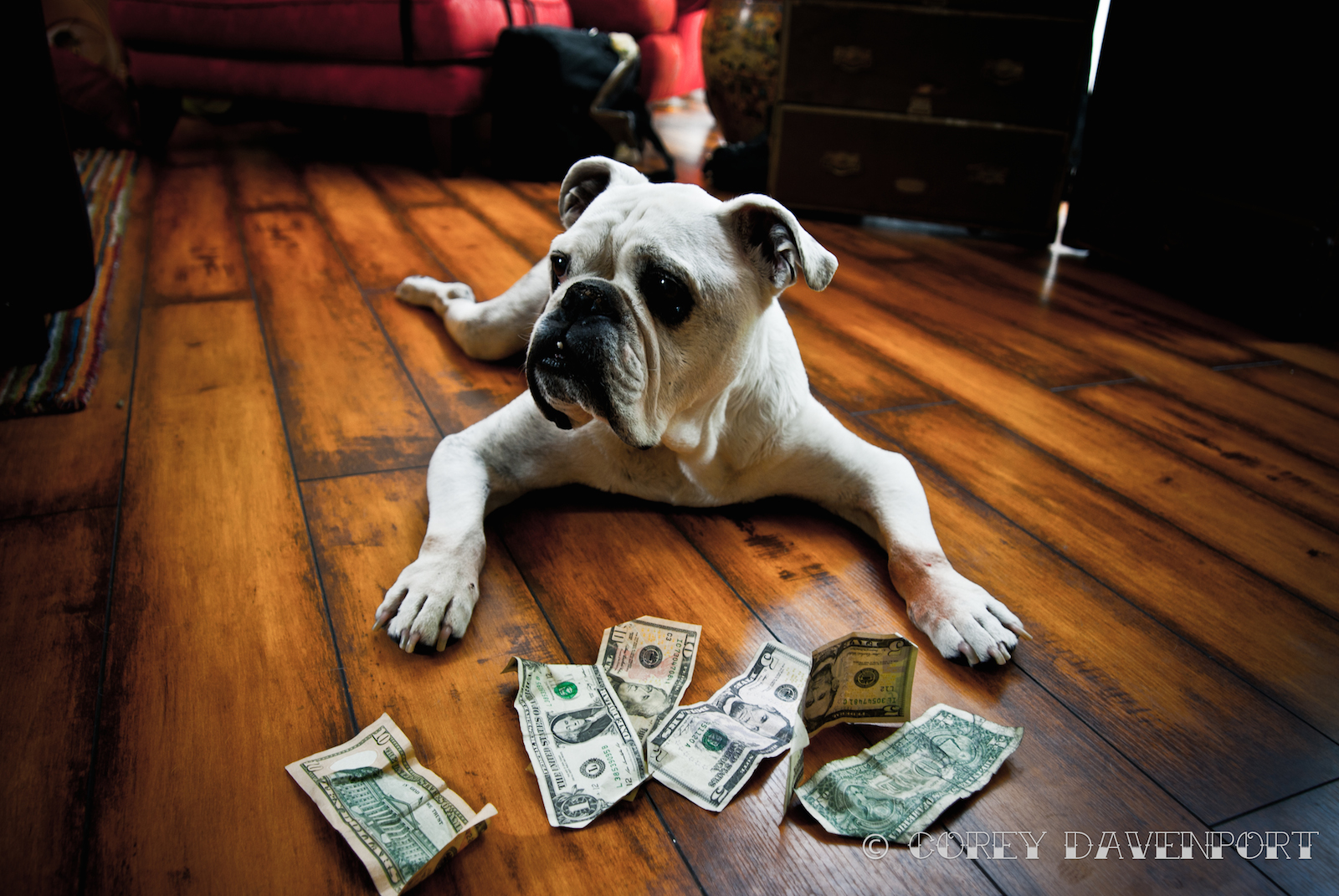8 Ways to Reduce Pet Care Costs