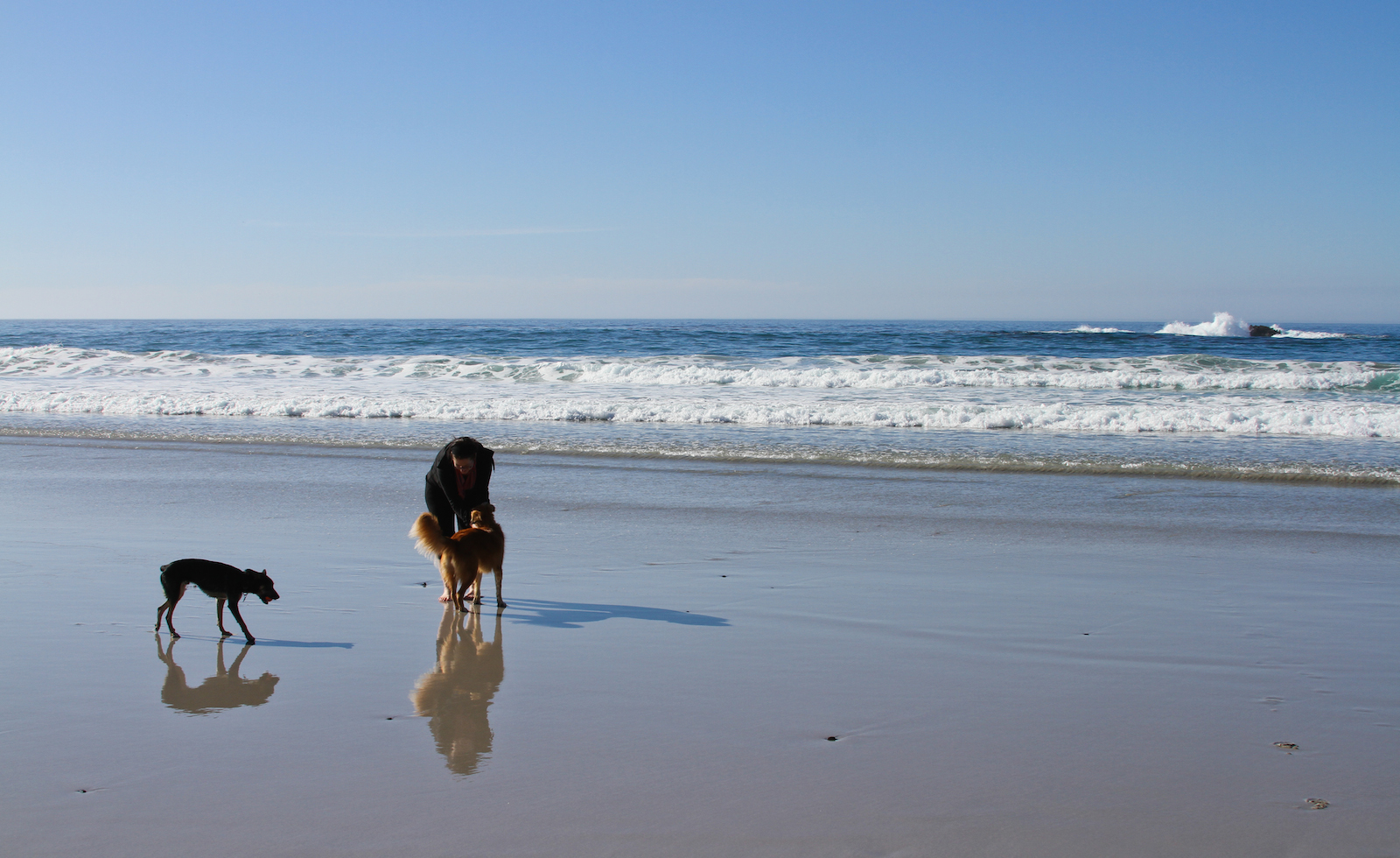 10 Awesome Dog-Friendly Places in the U.S. to visit in 2015