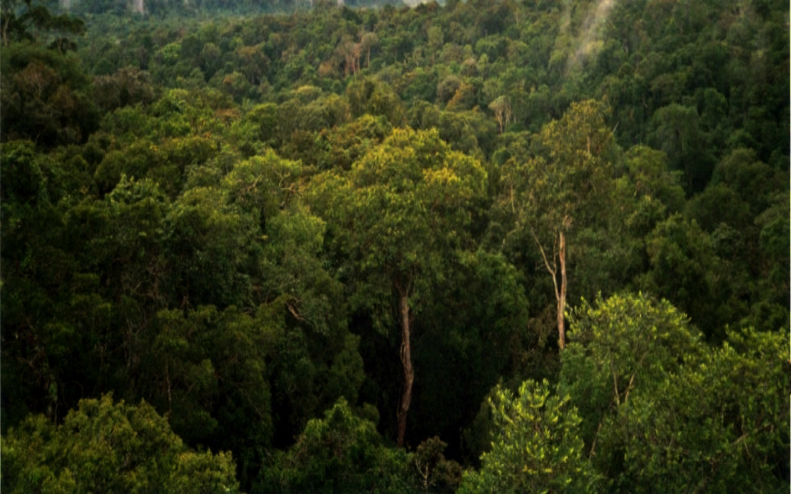 We're Losing the Amazon Rainforest! Here's How You Can Help Bring it Back.