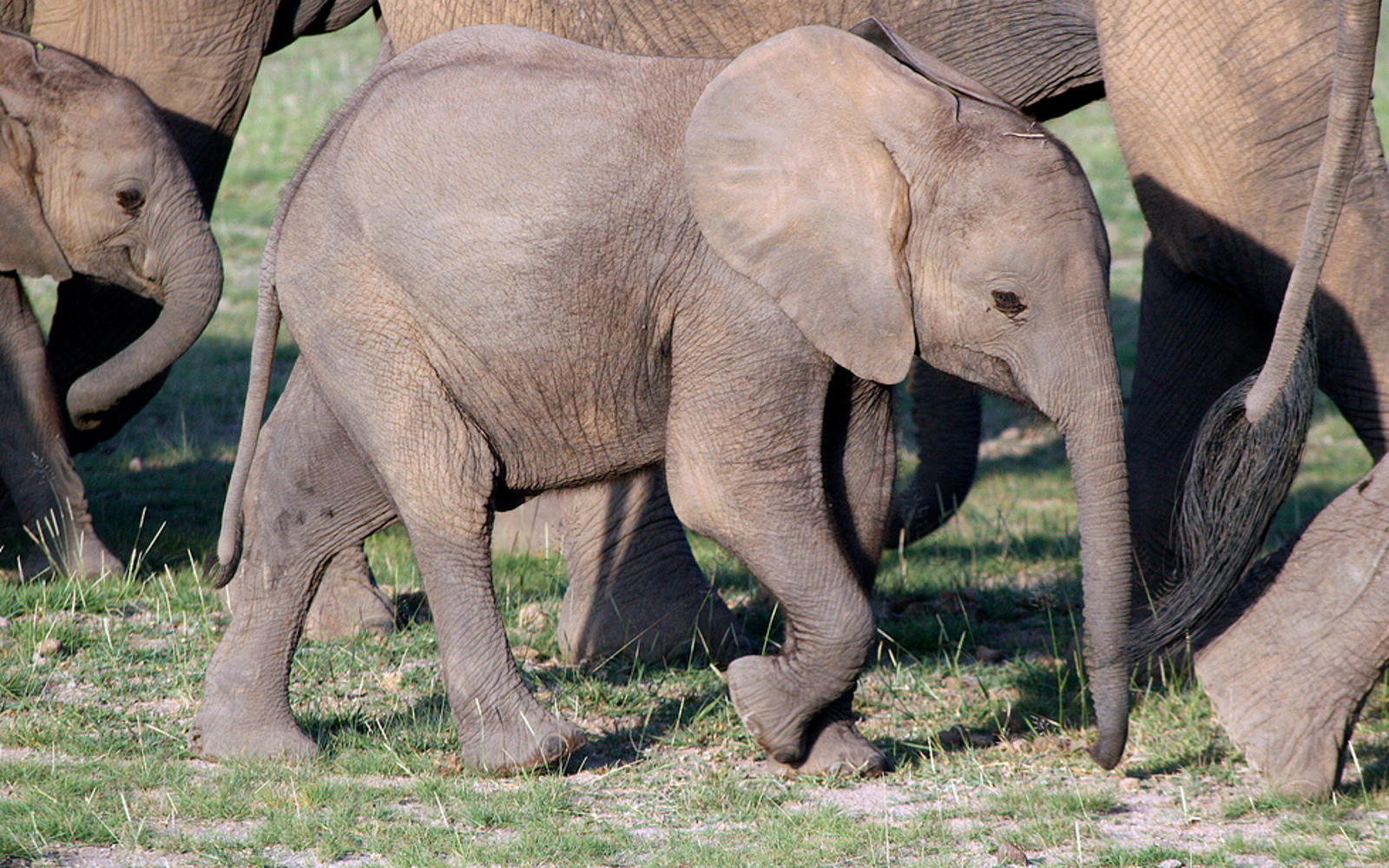 Reality Check: How Wild Capture to Stock Zoos Fuels Elephant Extinction