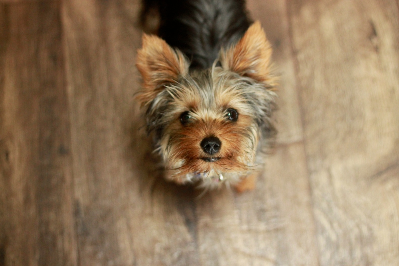 What Pets Can Teach You About Life and Yourself