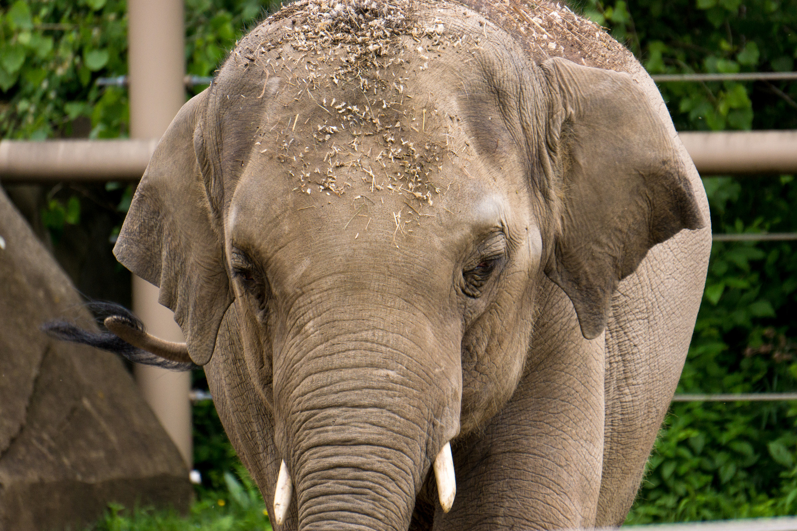 Why We Shouldn't Keep Solitary Elephants in Captivity