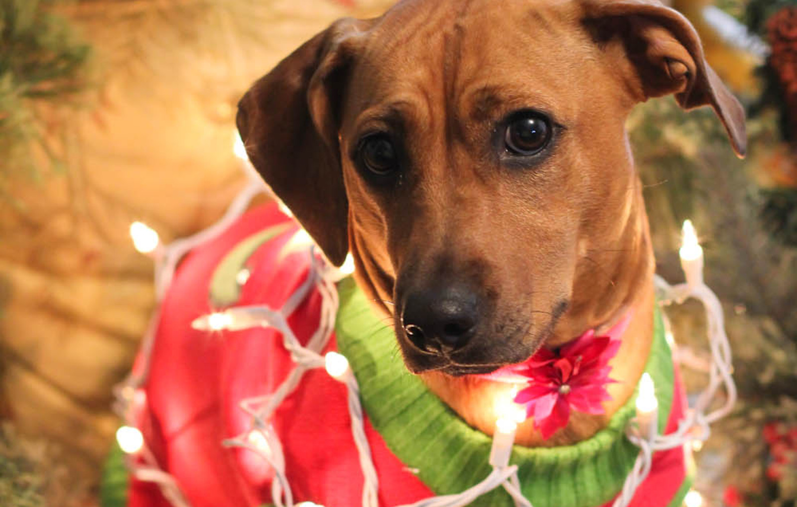 9 Tips to Get Your Pets to Behave Around Guests This Holiday