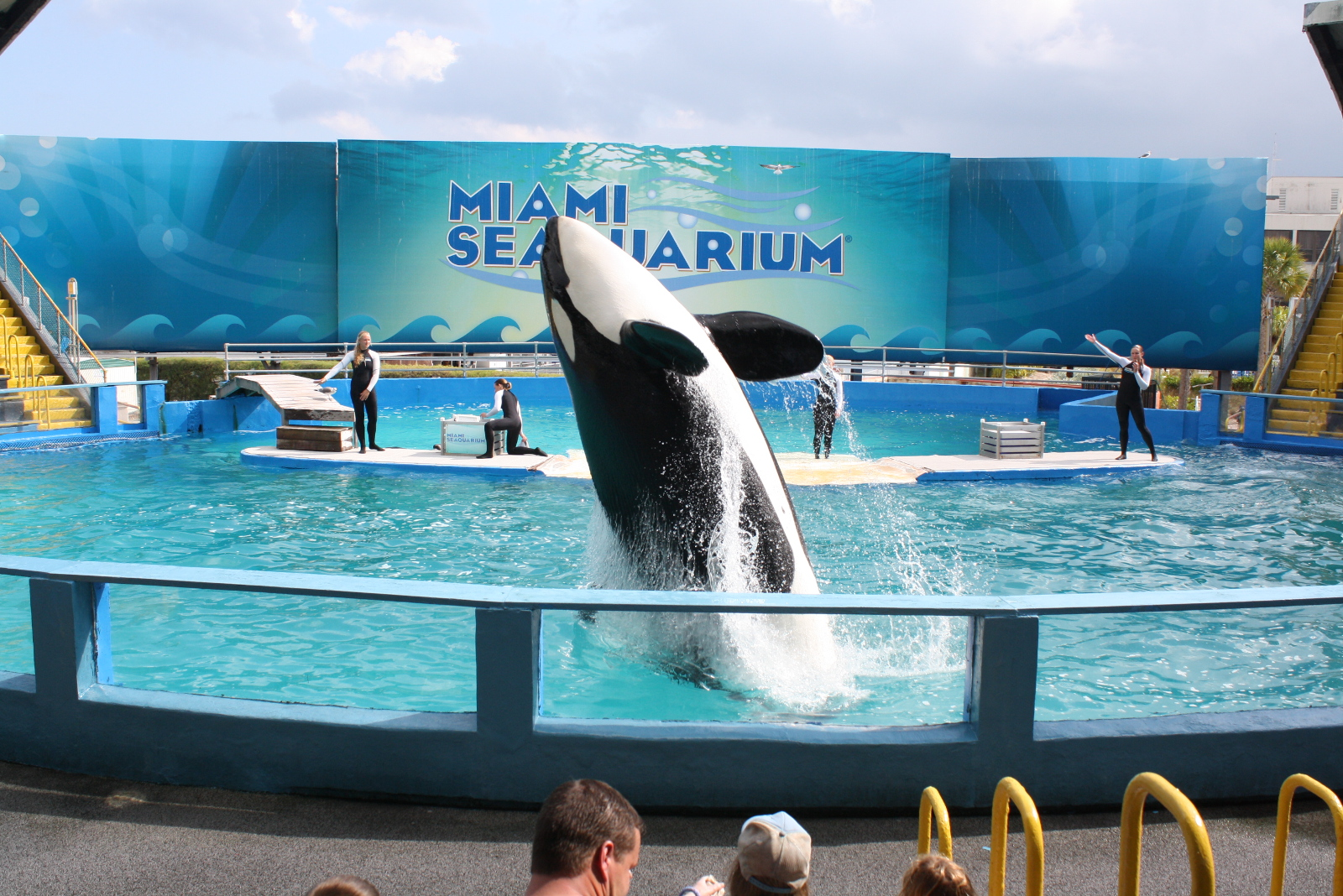 After 44 Years of Pain and Suffering in Captivity, is There Hope for Lolita?