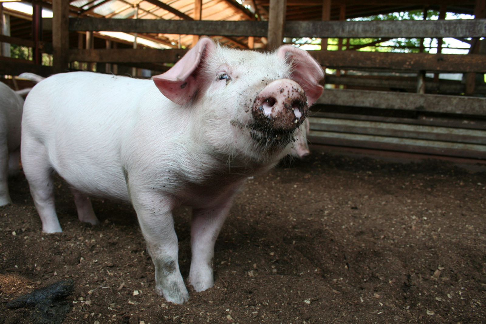 9 States That Have Banned Gestation Crates