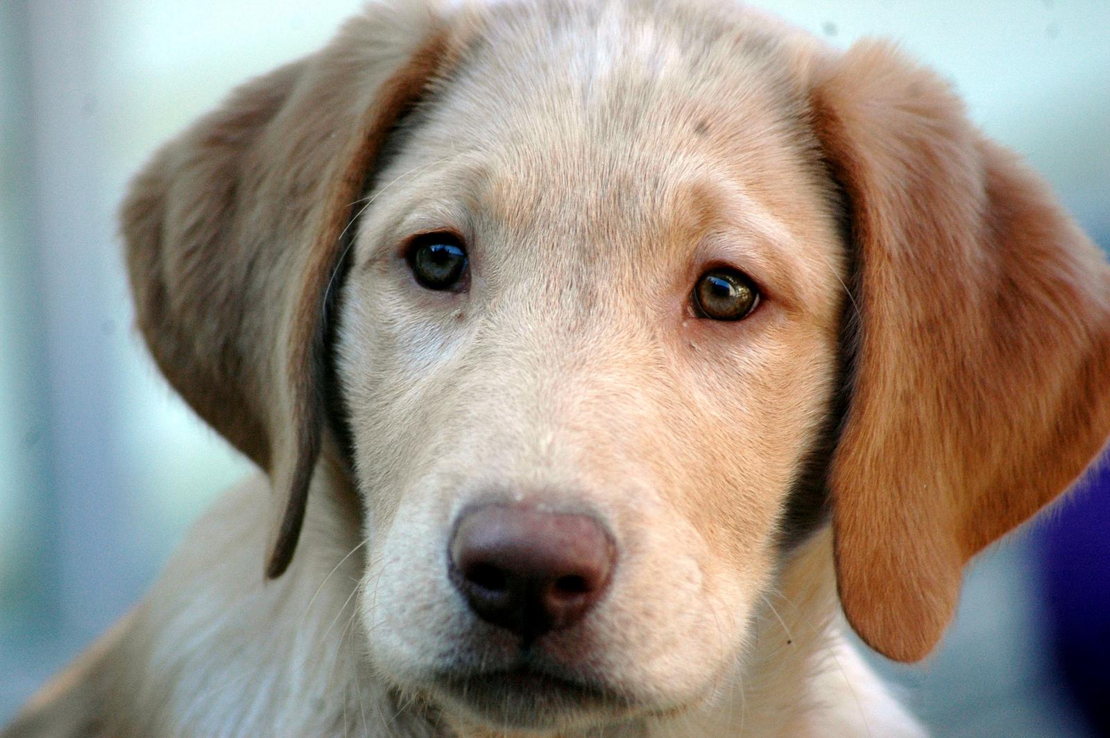 Precautions You Should Take When Hiring A Pet Sitter