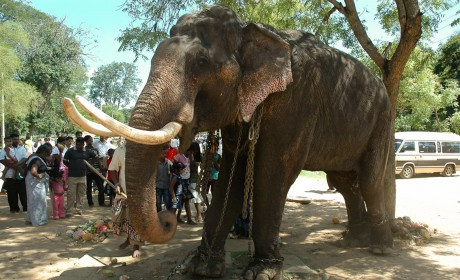 EXPOSED! Namuang Safari Park is a Place for Cruelty and Corruption