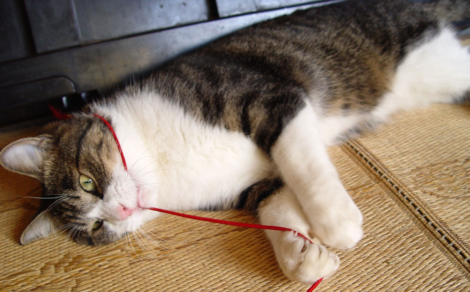 Don't Forget to Floss: All You Need to Know About Pet Dental Care