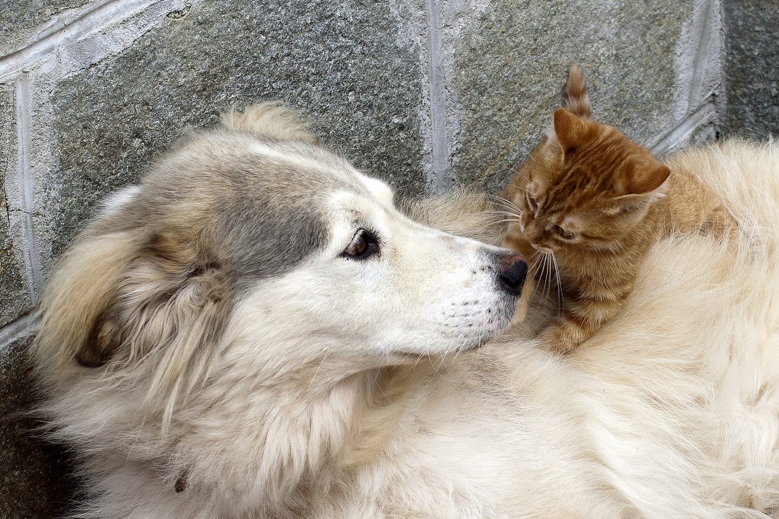 5 Ways Attitudes Towards Dogs and Cats Are Changing for the Better in China