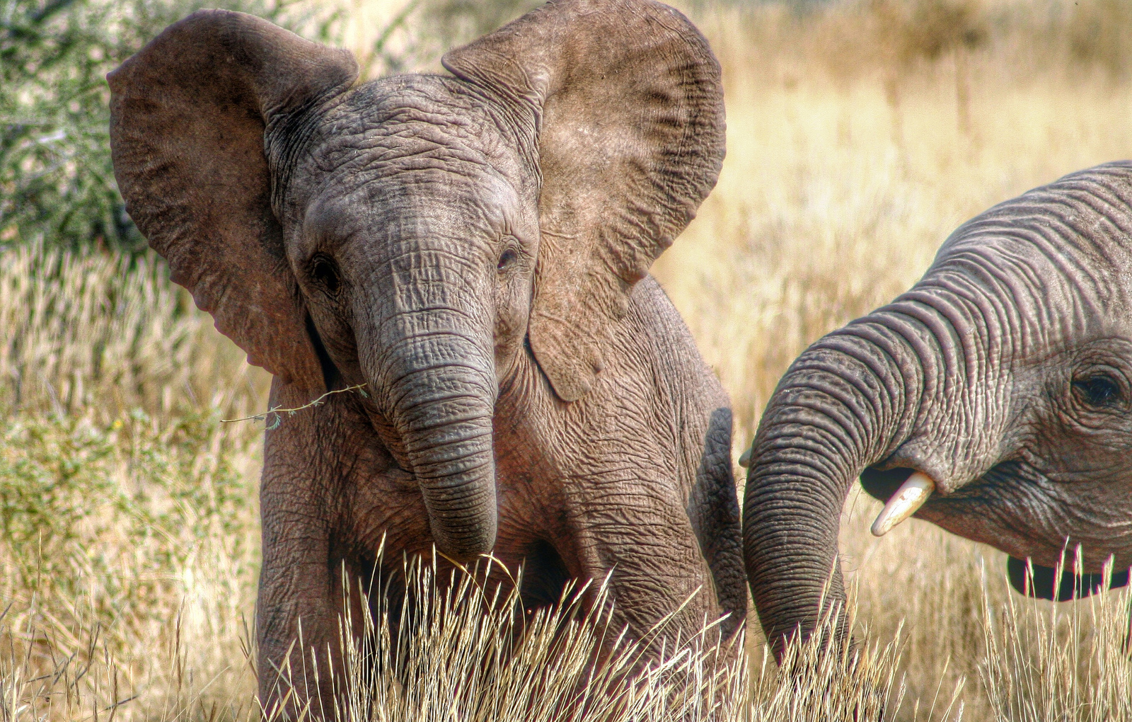 Zimbabwe Wants to Export 64 Baby Elephants Into Life in Captivity. Here's What You Can Do to Help!