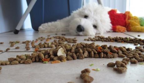 dog laying next to dog food