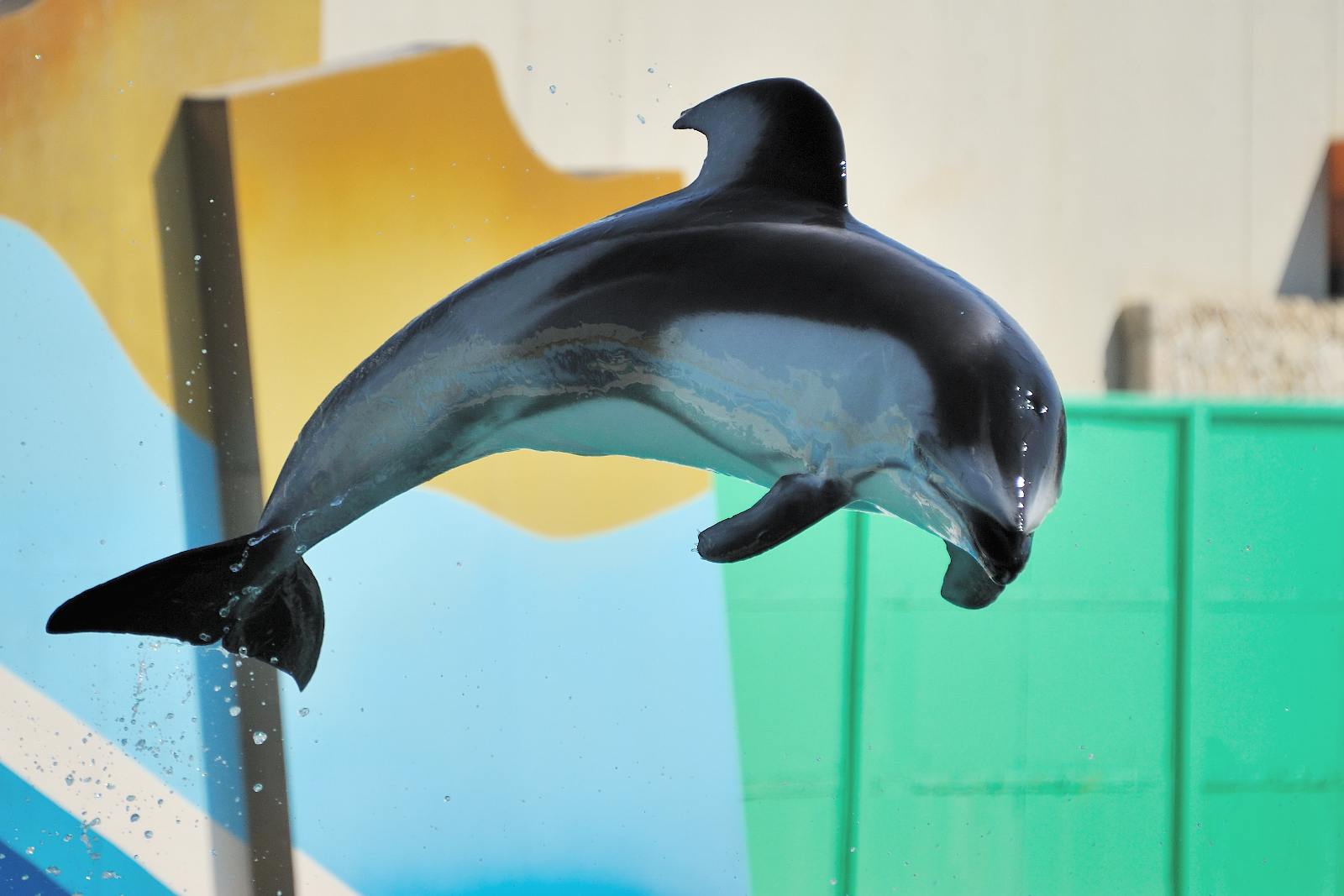 A Dolphinarium Free Europe is in Sight – Here's How You Can Help!