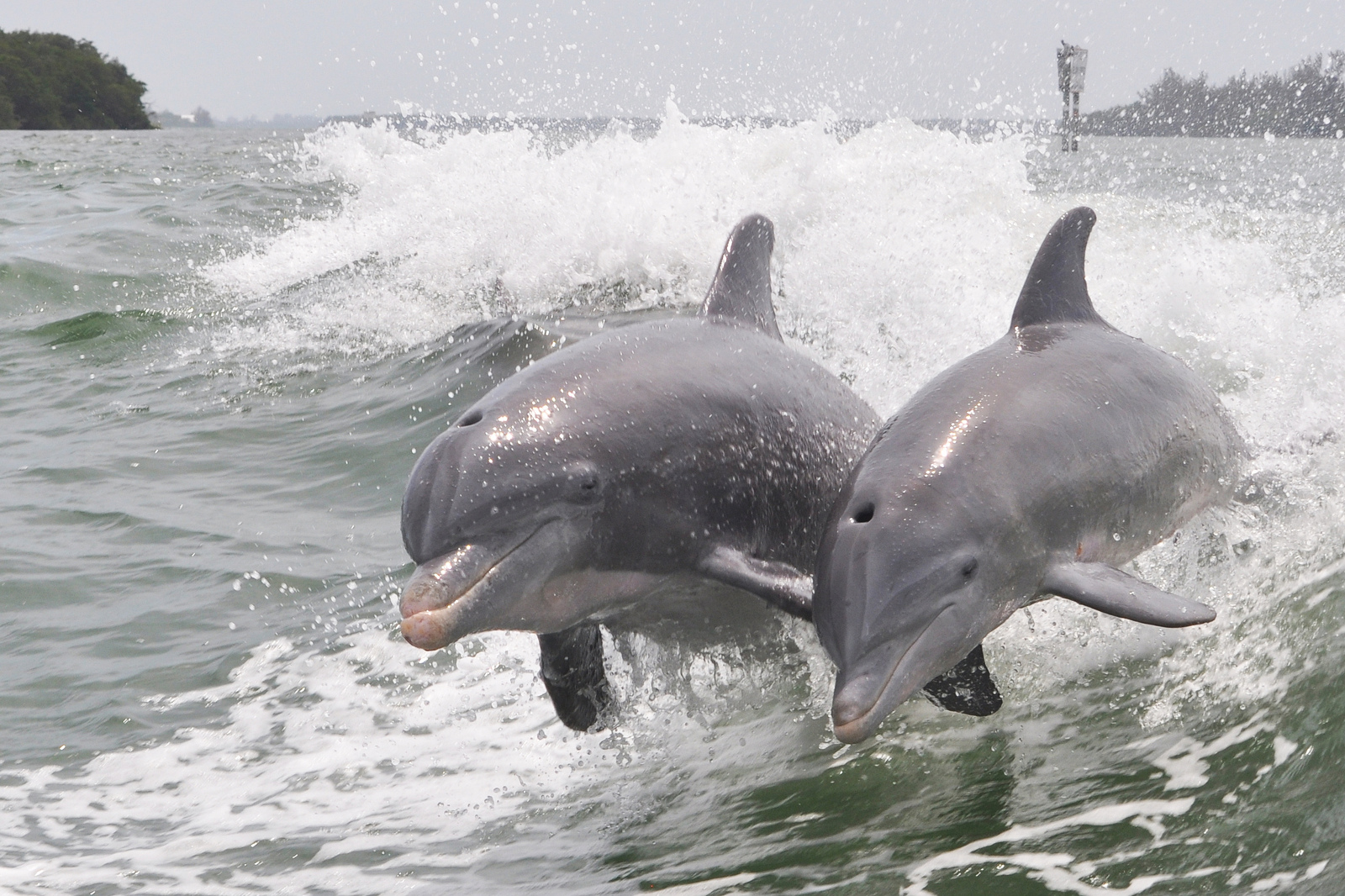 Is There Hope for Taiji's Dolphins? What We've Learned From This Year in The Cove