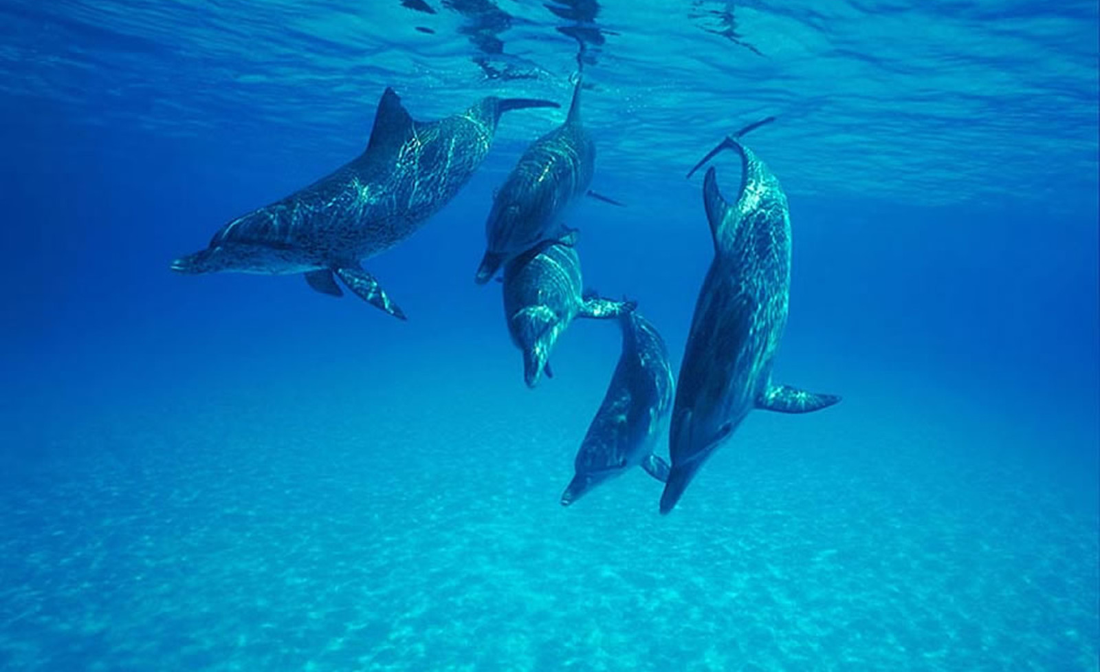 Dolphins and Humans Are More Similar Than You Realize