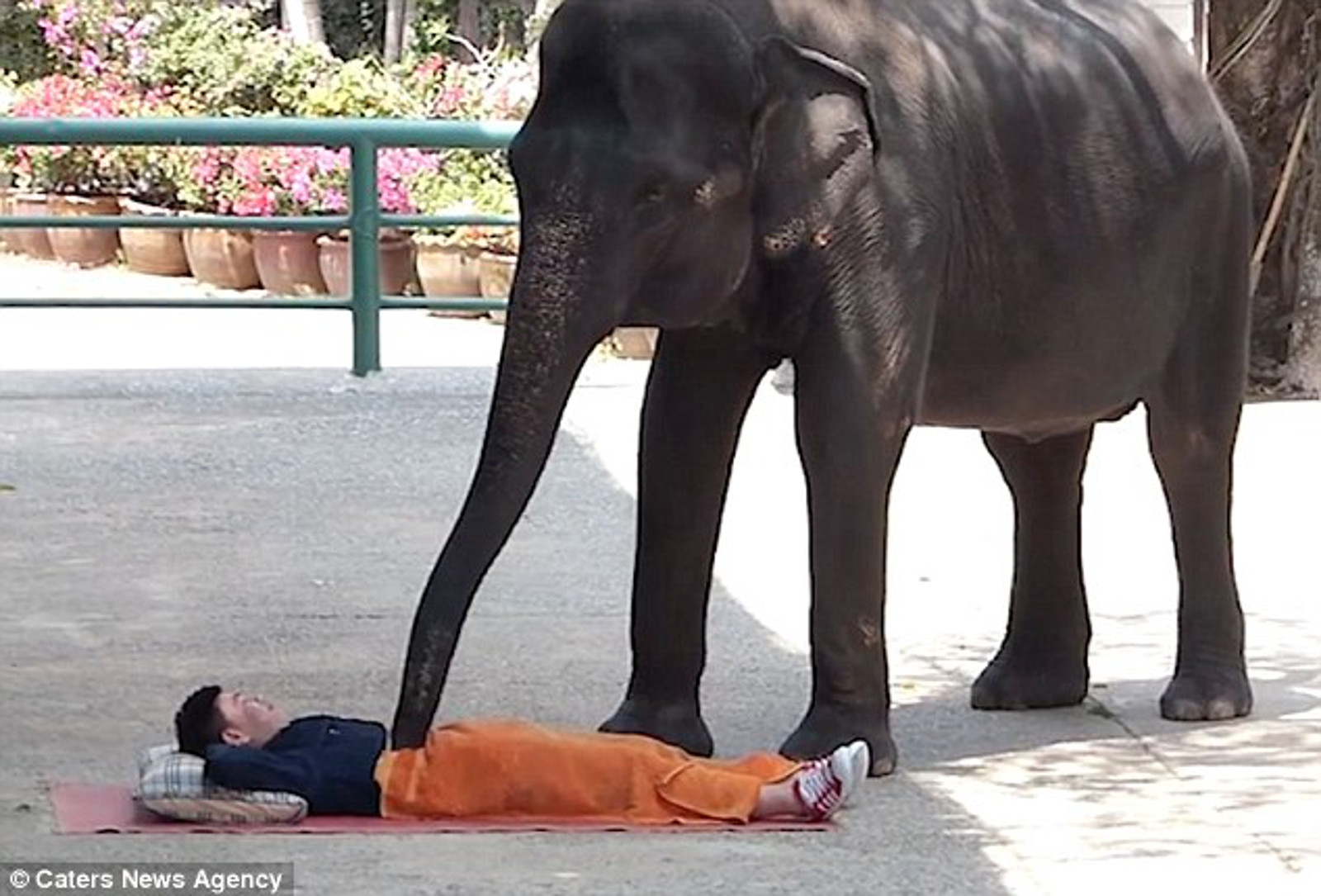 Would You Get a Massage From an Elephant? The Surprising Reason It Might Not be a Great Idea