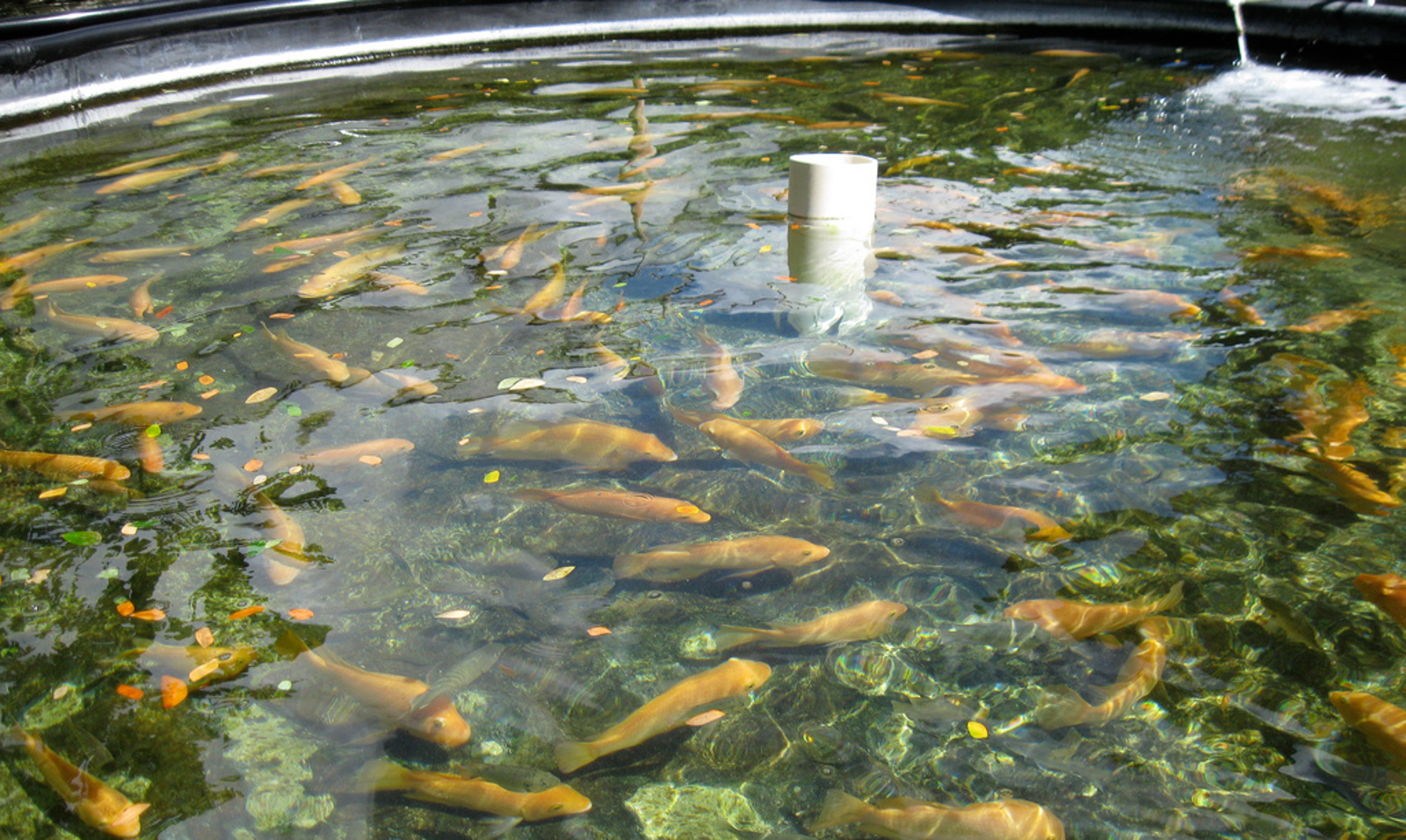 Fish: The New Factory Farmed Animals