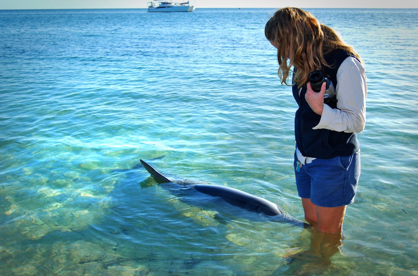 Wild Dolphin Feeding: Australia's Industry Exposed