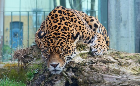 The Shocking Truth About What Happens to 'Surplus' Zoo Animals