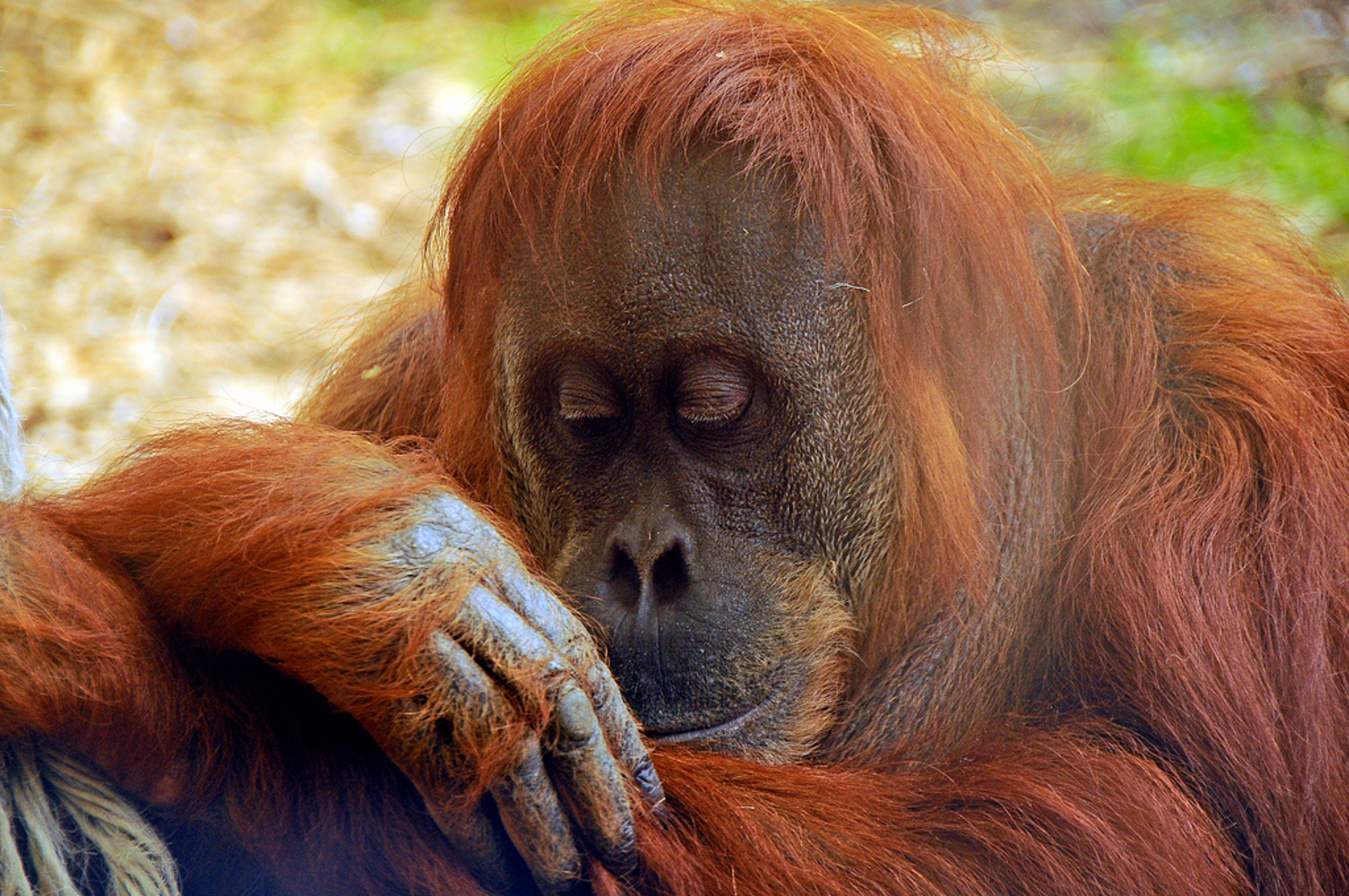 Has Palm Oil Got You Down? Don't Worry These Organizations Have Got Our Back