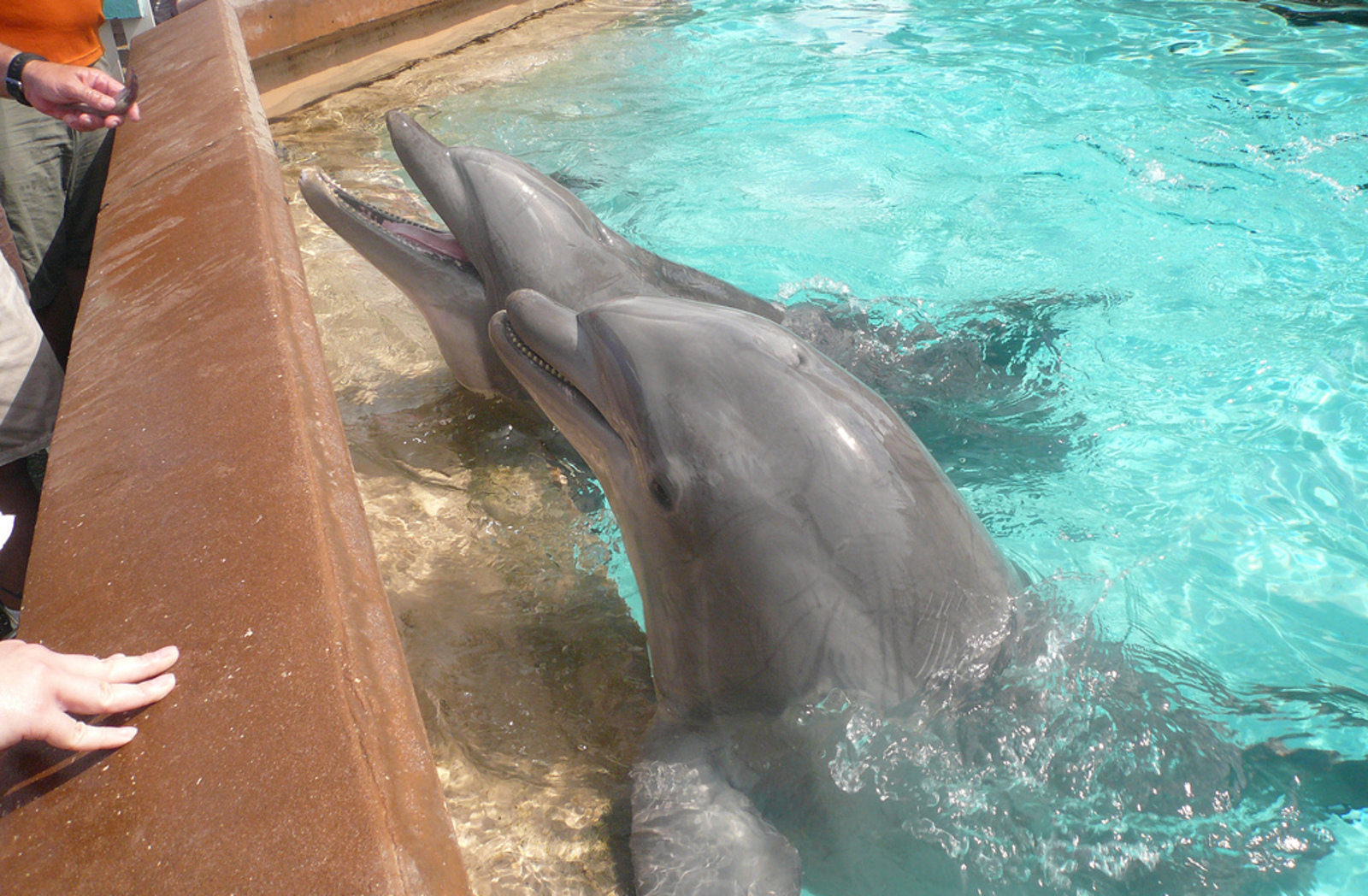 Do Dolphins Have Healing Abilities, or is Dolphin Therapy Just Another Guise for the Captivity Industry?