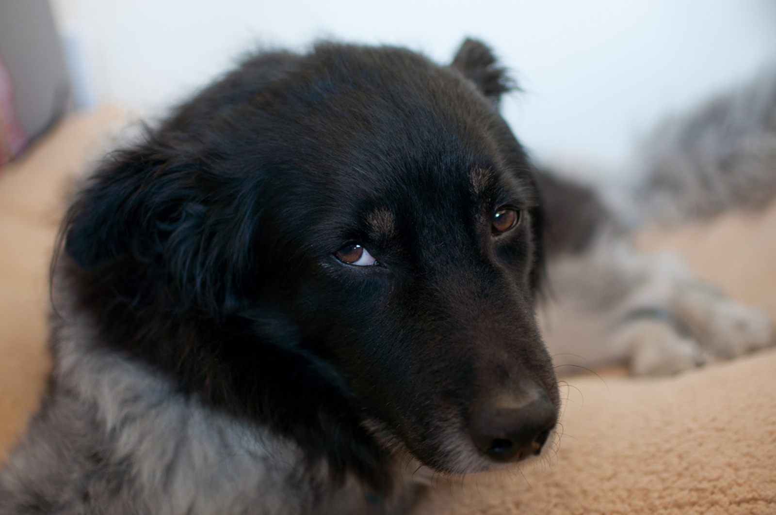 Is It a Quirk or the Symptom of Illness? 5 Commonly Misinterpreted Pet Behaviors