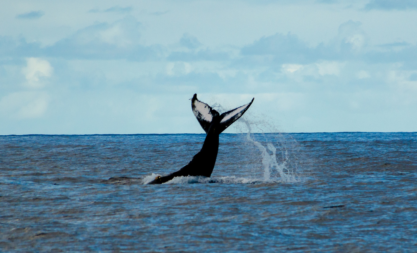 5 Lies Told By Countries Who Still Think Killing Whales is a Good Idea
