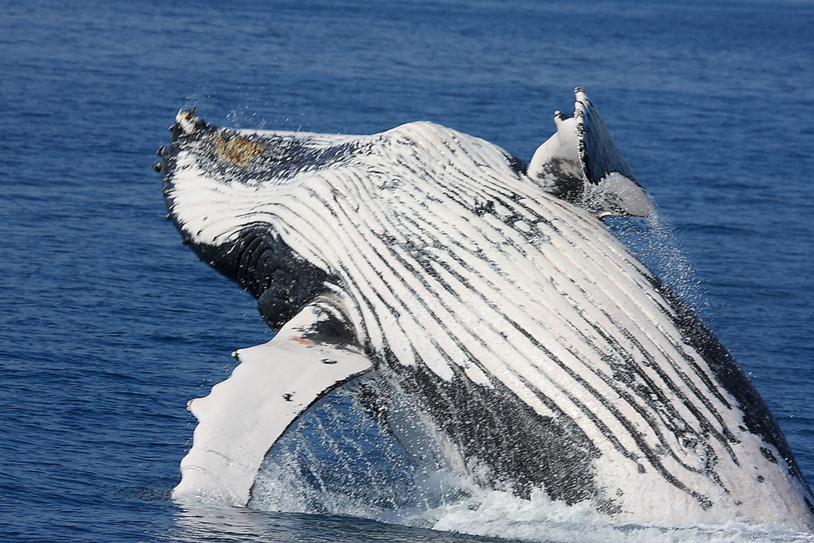 Whales and Climate Change