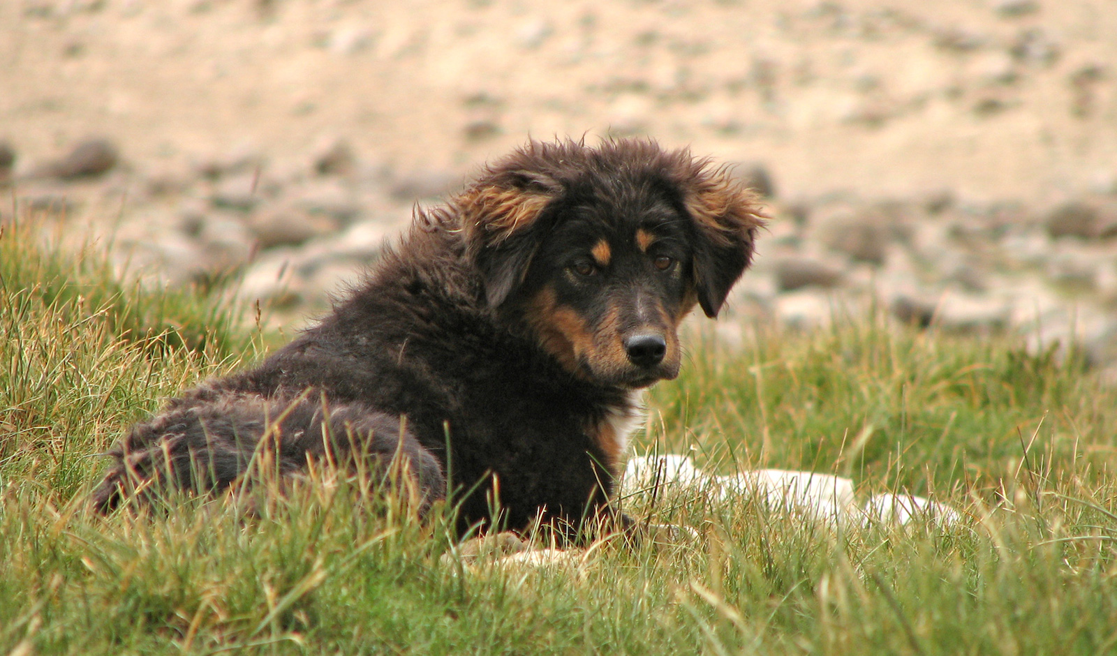 What to Do if You Find a Stray or Lost Dog