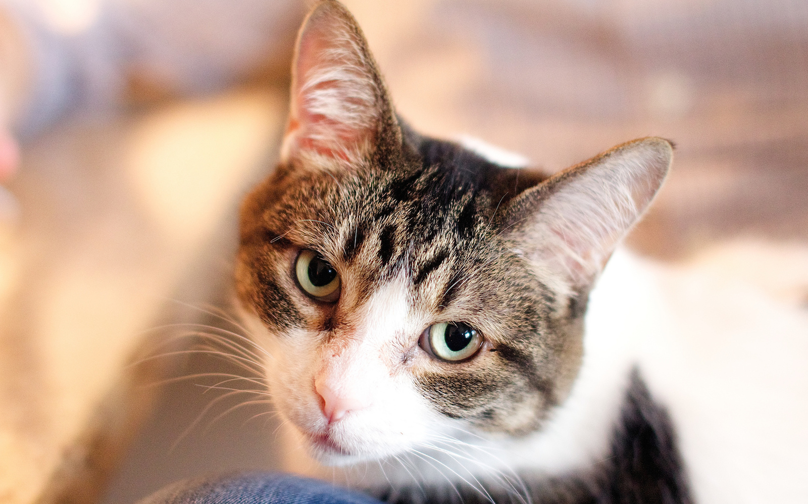 5 Common Cat Behavioral Issues and How to Address Them