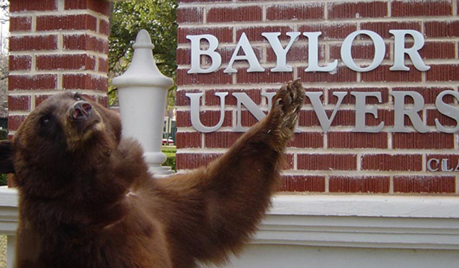 Captive in the Name of Tradition. 3 Live Animal Mascots That Will Make You Rethink College Sports