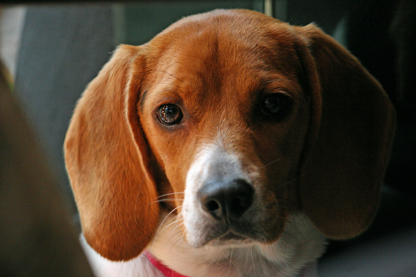 Is Your Pet's Food Tested on Animals?