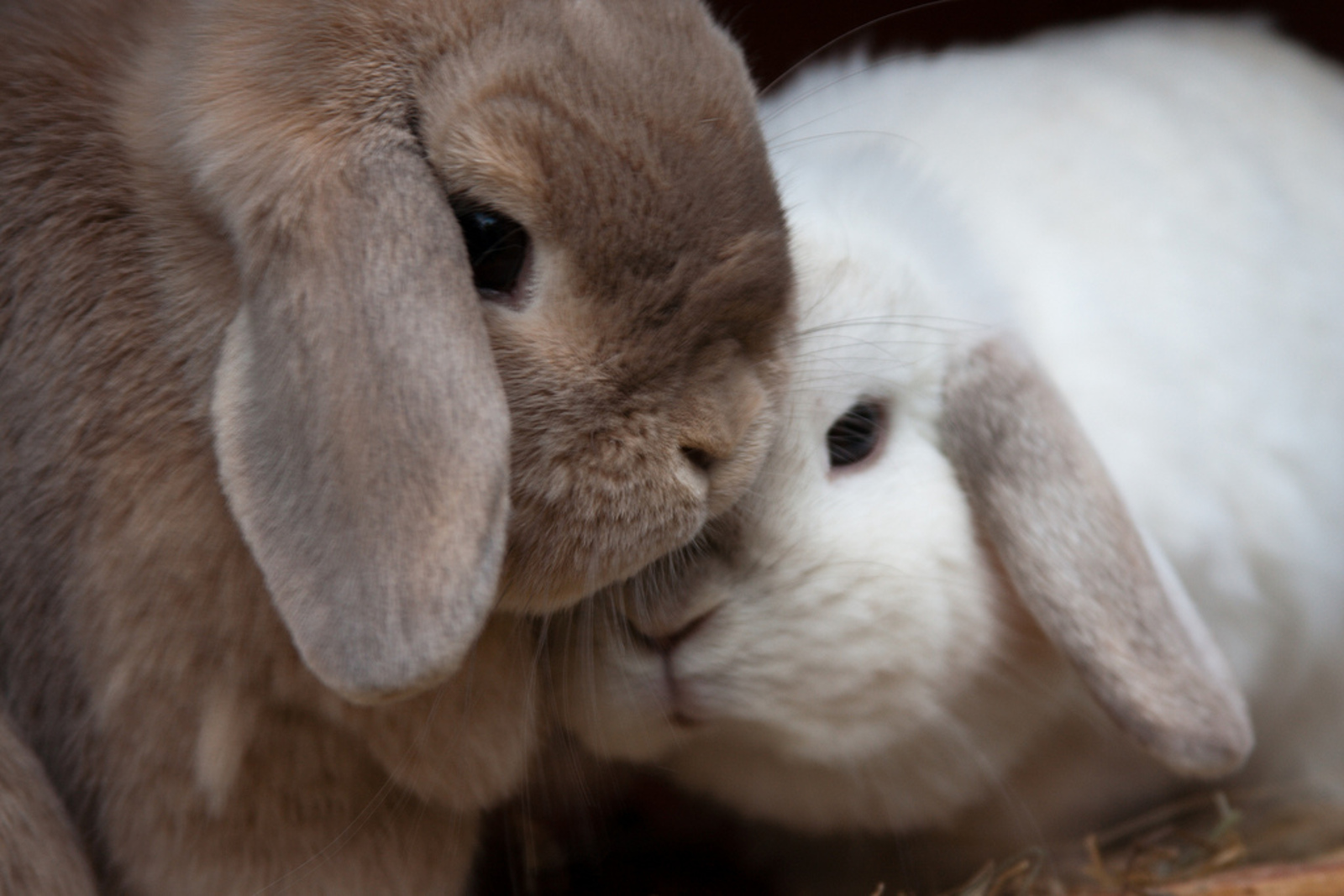 5 Cosmetic Brands Cruelty-Free Consumer Should Avoid