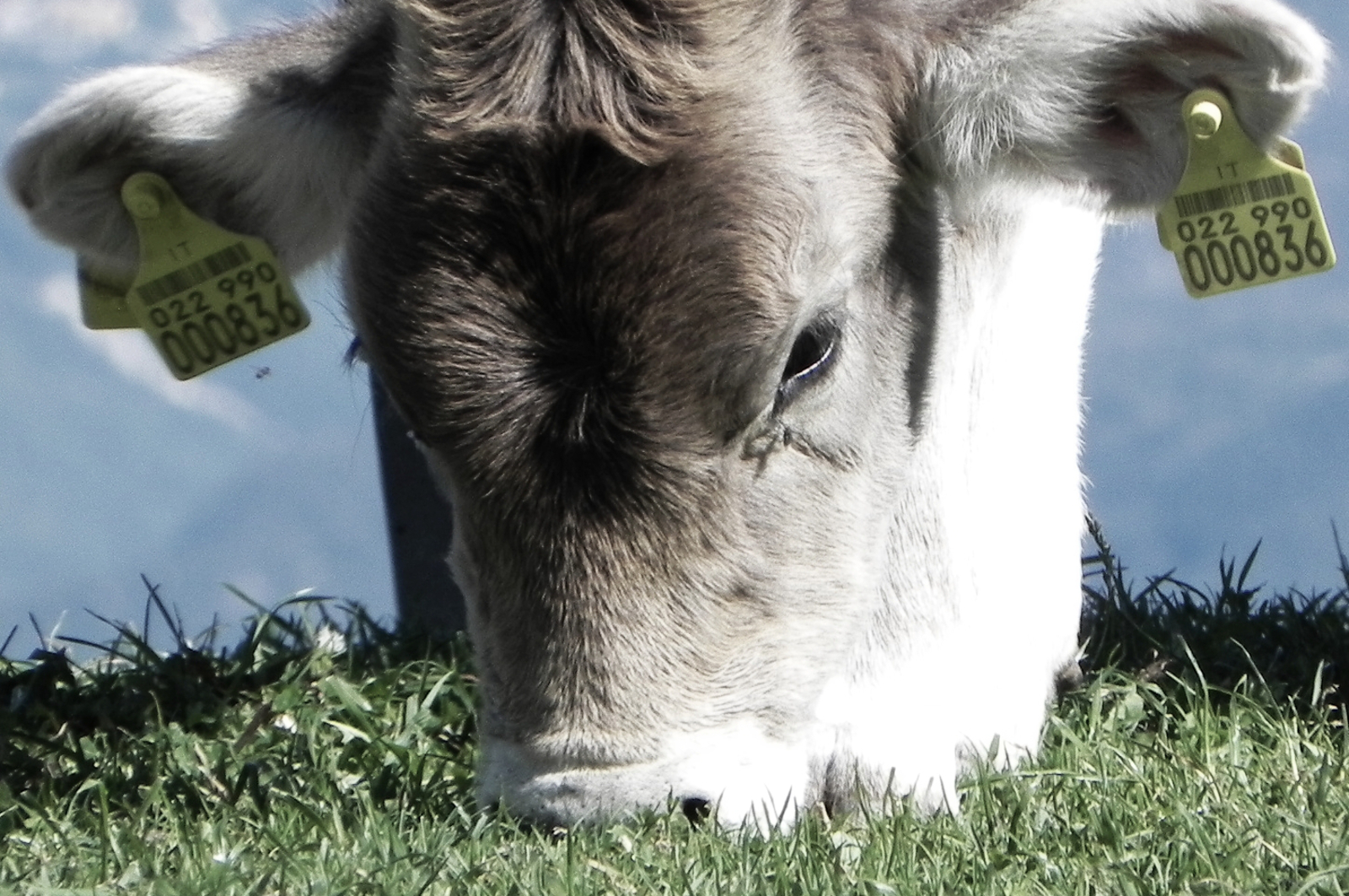 Debate Ends Here. Can Grass-Fed Beef Actually Be a Better Option for People, Animals and the Planet?