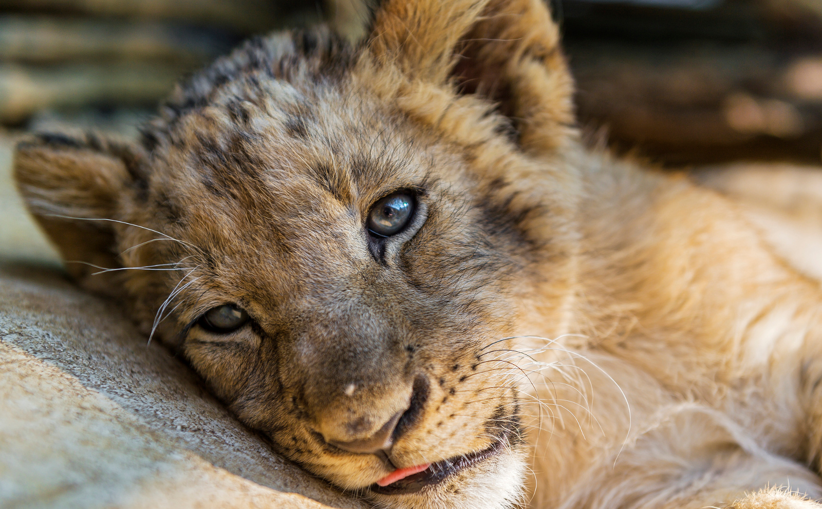 Why Its Important to Teach Kids That Exotic Animals Are Not Pets or Toys