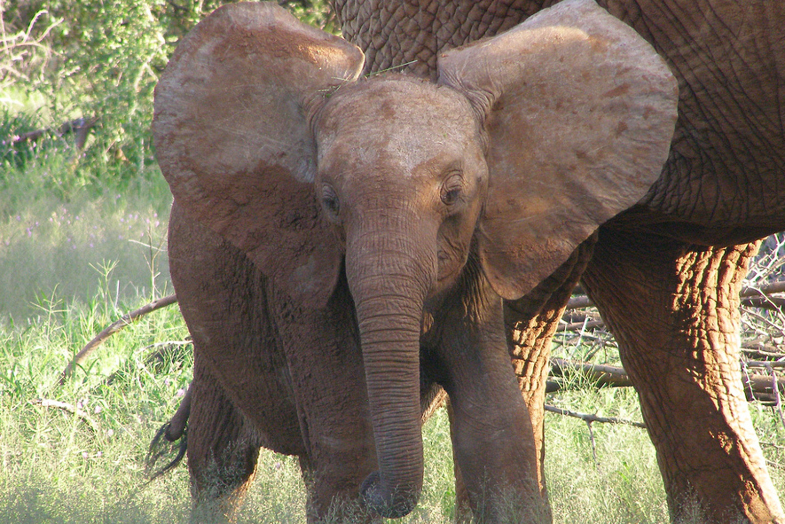 Grace Ge Gabriel: Are China's Zoos Really 'Acceptable' Places for Zimbabwe's Wild Baby Elephants?