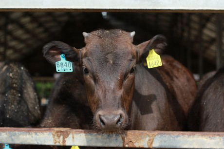 Factory Farming is Cruel to More Than Just Animals