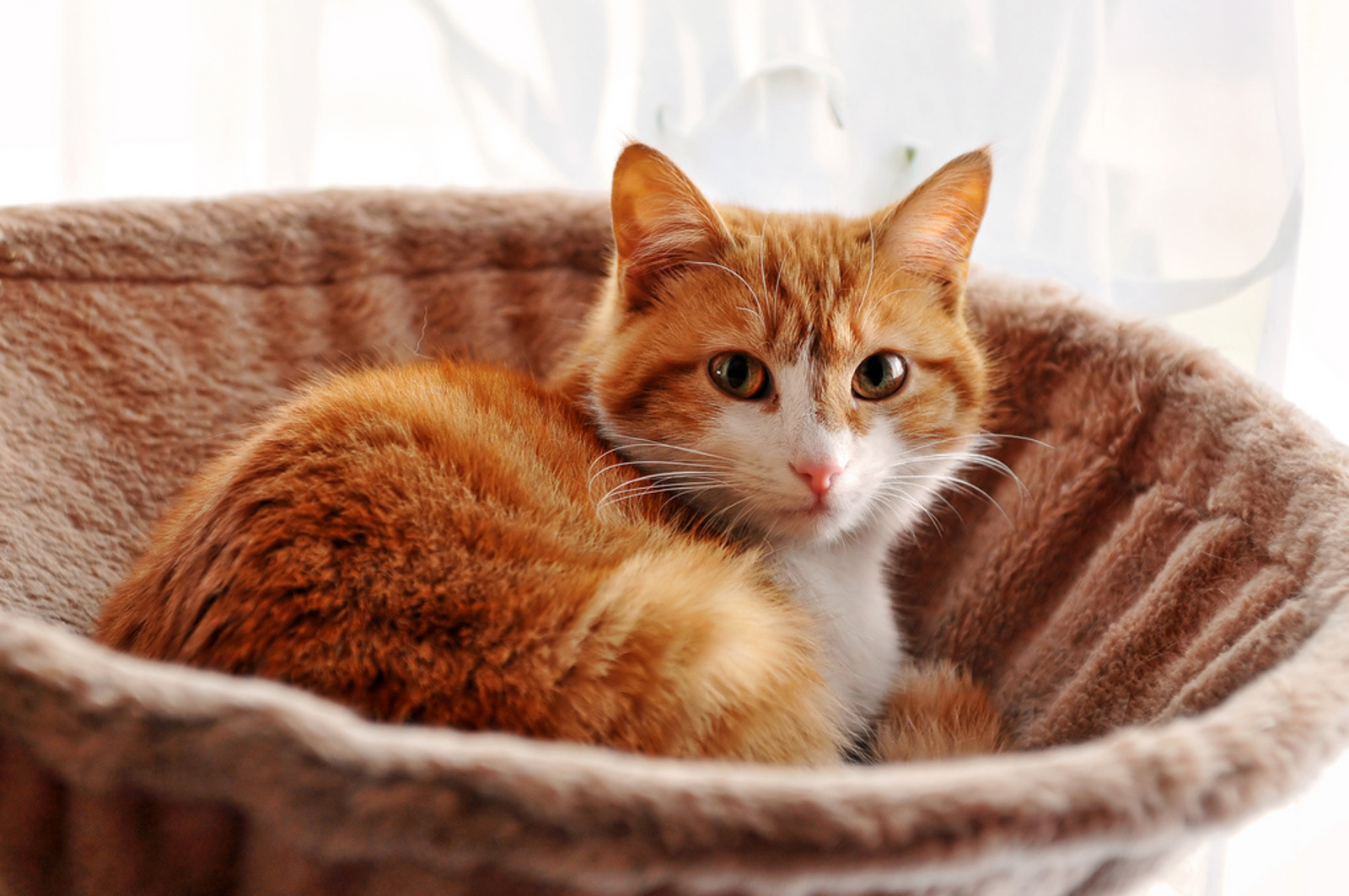 How to Spot Cancer on Your Pets