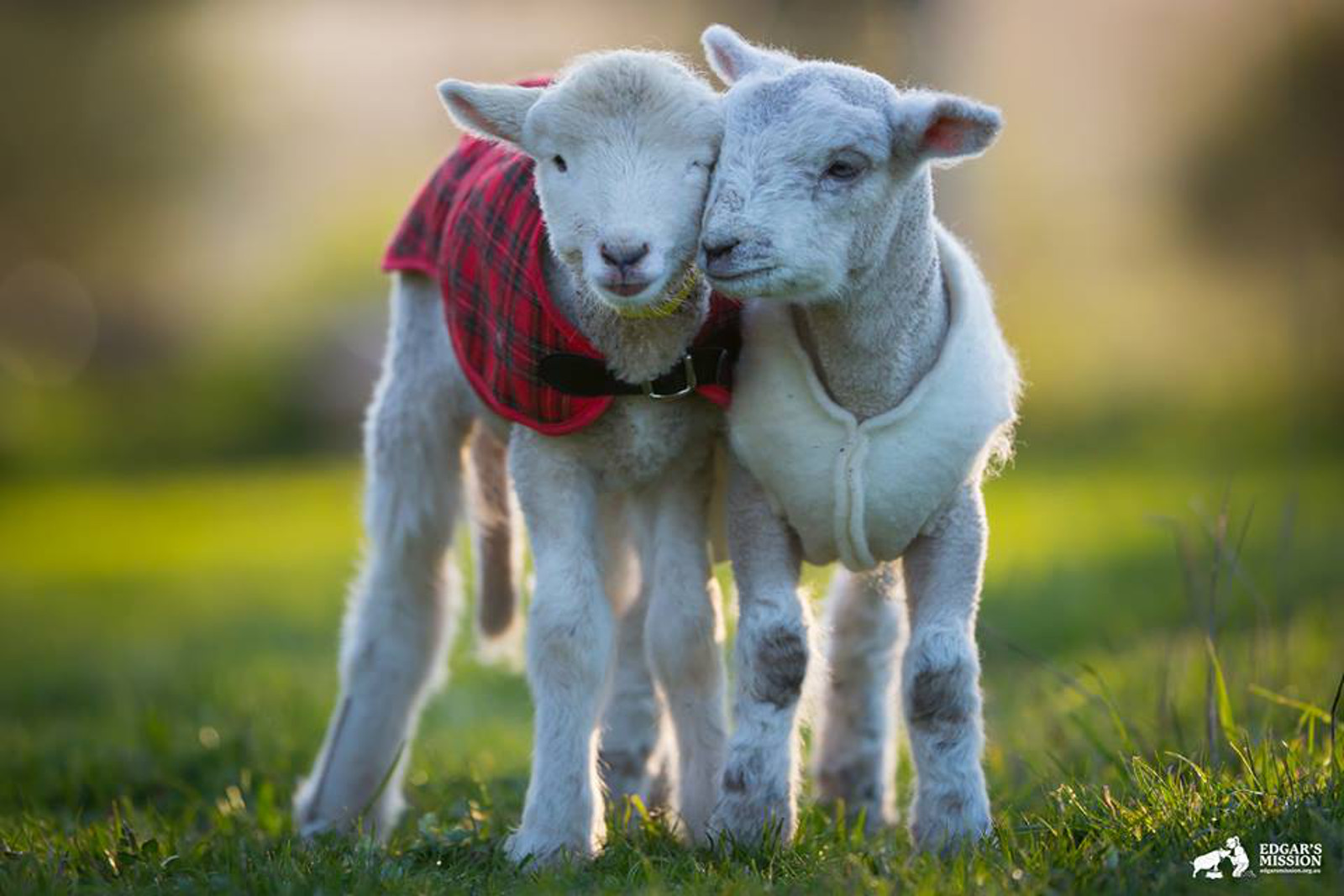 What We Can Learn About Parenting From Farm Animals
